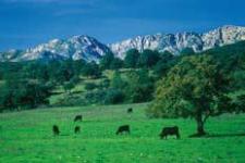 Cabaña bovina en el valle del Tiétar (foto de José Luis Rodríguez)