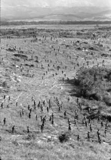 Escena de combate en Dead Birds (foto de Robert Gardner)
