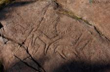 Petroglifos - Imagen cortesía del Parque Arqueolóxico da Arte Rupestre Campo Lameiro